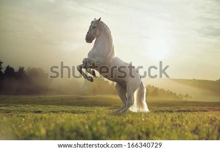 Beautiful white horse #166340729