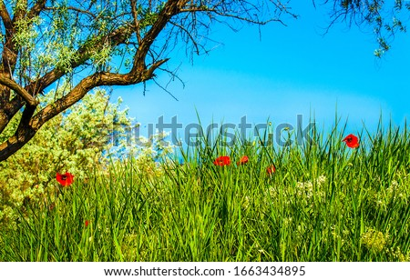 Spring summer nature scene. Summer nature scene. Summer green grass flowers. Summer nature view #1663434895