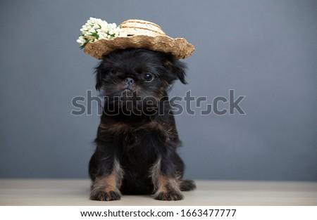 image of dog hat flower table