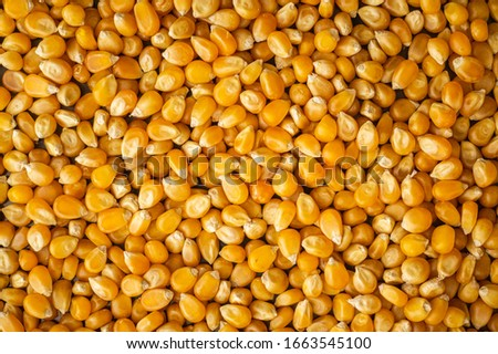 Bulk of healthy organic corn