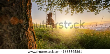 Teddy bear sitting on a Swing on sunset on a old oak tree. Concept image about love and childhood