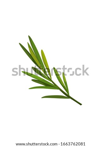 Green sprig of rosemary cartoon style, isolated vector icon. Graphic element for packaging, logo, for rosemary products. Royalty-Free Stock Photo #1663762081