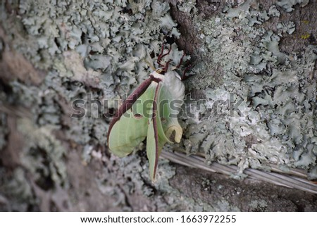 Green and Brown Moth on Tree