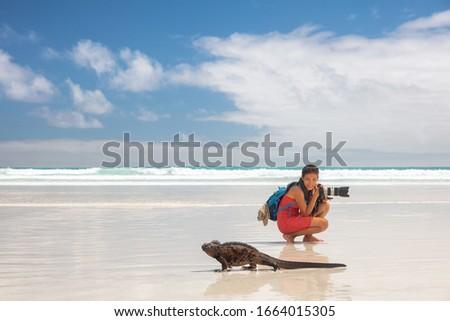 Travel adventure tourist nature photographer on vacation on Galapagos beach with Iguana walking by on Tortuga bay beach, Santa Cruz Island, Galapagos Islands. Funny holidays image, Ecuador.