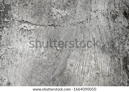 Abstract cement wall texture background #1664090050