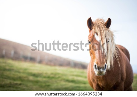 Wild horse in tranquil, remote landscape on mountain in France