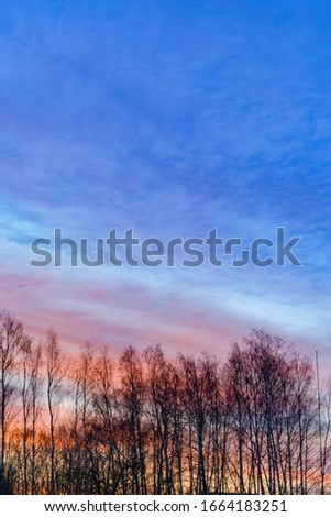 Dramatic sky and clouds, trees silhouettes on a sunrize. Nature background. Portrait orientation with copy space #1664183251