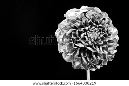 Stylish bouquet. Botany concept. Beautiful silver flowers. Floral shop. Metallic steel or golden color. Metal flowers. Eternal beauty. Fashion and beauty. Flowers covered metallic paint close up.