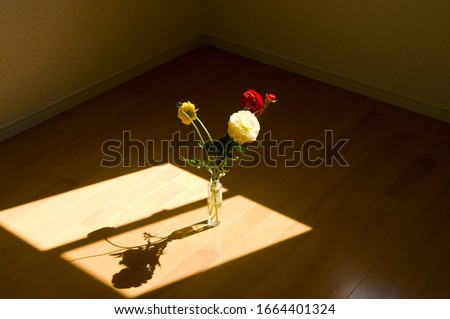 The shadow of the window frame and the flowers are reflected on the floor. The name of these flowers is Ranunculus. Scientific name is Ranunculus asiaticus.