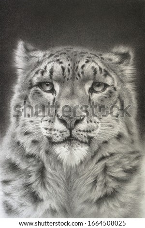 Portrait of a snow leopard. Realistic drawing #1664508025