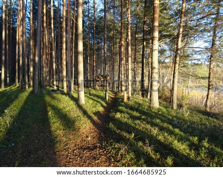 long shadows from trees in the autumn forest #1664685925
