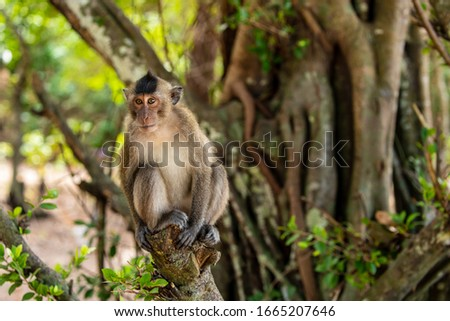 Macaque of Con Dao in Vietnam #1665207646