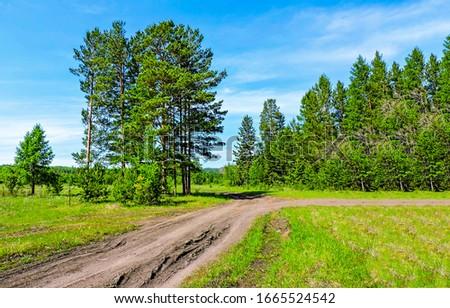 Summer green rural road landscape. Rural road in summer green nature. Summer rural road. Rural summer road #1665524542