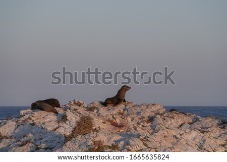 This picture shows the scenery of New Zealand.seals