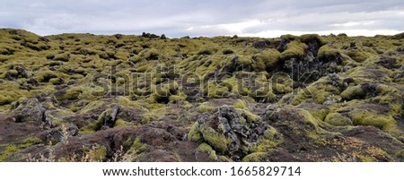 Icelandic Lava Field Covered in Moss #1665829714
