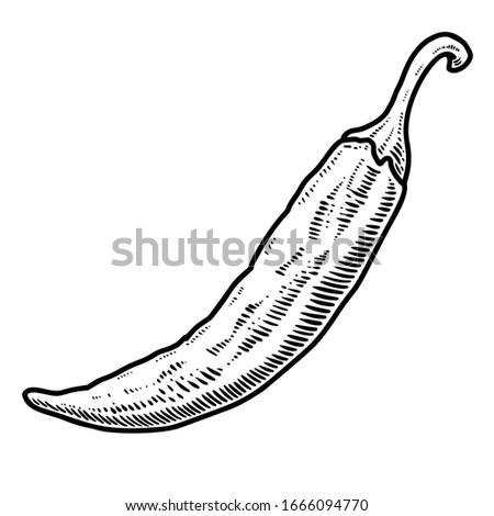 Illustration of chili pepper in engraving style. Design element for logo, label, sign, emblem, poster.