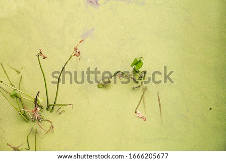 green background with plant branches coming out of the water covered with algae #1666205677
