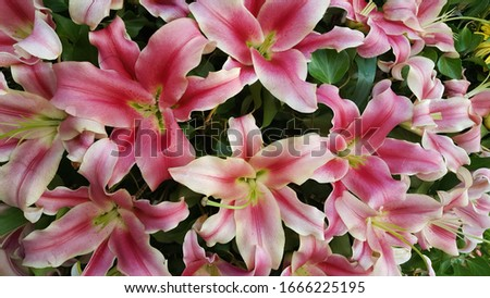 flowers background in a wide variety of colors and shapes #1666225195