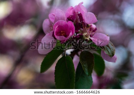 pink flowers on a twig with leaves, spring mood