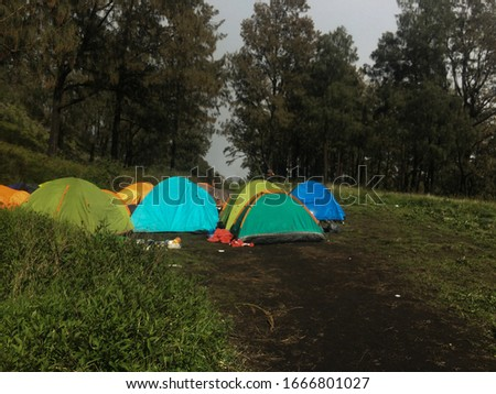camping outdoors with views of pine trees and green grass in mount lawu central java #1666801027
