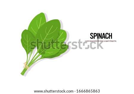 realistic spinach tasty fresh herb green leaves healthy food concept horizontal copy space vector illustration #1666865863