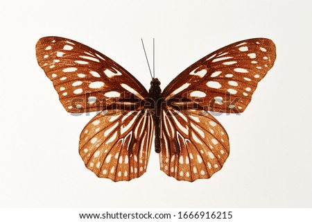 Butterfly specimen on white background  Royalty-Free Stock Photo #1666916215