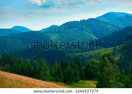 wild nature, summer landscape in carpathian mountains, wildflowers and meadow, spruces on hills, beautiful cloudy sky #1666927279