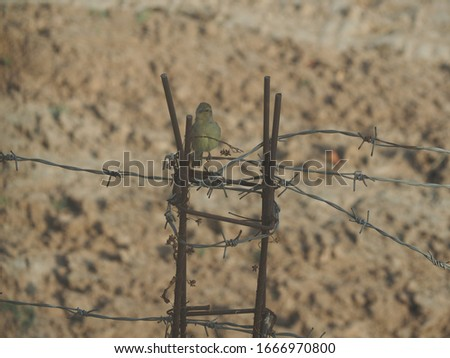 A flock of birds perched on a barbed wire fence #1666970800
