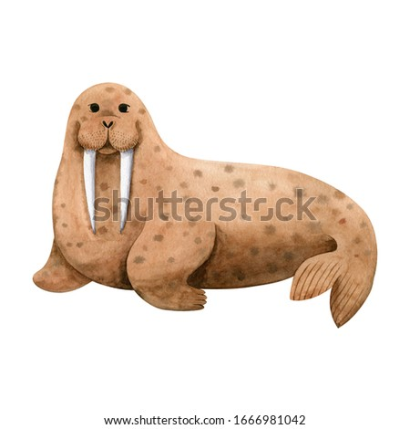 Cute sea walrus-watercolor illustration isolated on white background. Cartoon stylized animal character, hand drawn clipart. Illustration for clothes, stickers, baby shower, greeting cards, prints.