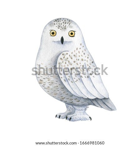 White polar owl-watercolor illustration isolated on white background. Cute cartoon stylized animal character, handmade clipart. Illustration for clothes, stickers, baby shower, greeting cards, prints.