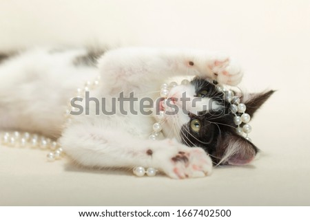 Black and white long hair fluffy kitten laying on white blanket playing with white pearls. #1667402500