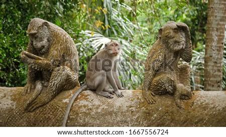 Monkeys at Ubud Monkey Forest, Bali, Indonesia #1667556724