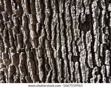 Copaiba tree bark (Known as the oil tree) #1667559961