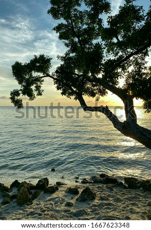 Landscape. Sunset view through a tree branch from the coastline. Beautiful natural background. Side view of a tree by the ocean. Vertical, free space, nobody. Natural beauty concept.