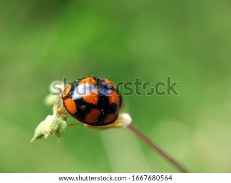 Ladybug on wild grass flowers #1667680564