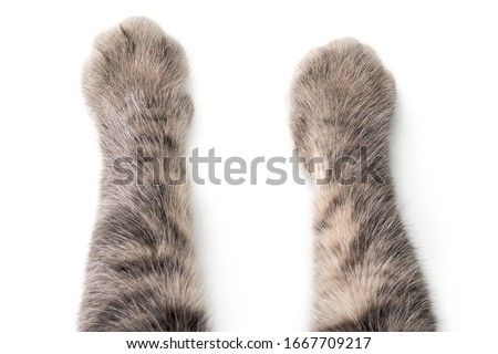 Cat's Paws on white background. Royalty-Free Stock Photo #1667709217