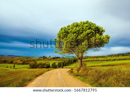 Flat rows of ploughed fields and meadows. Picturesque hills of the legendary Tuscany. Dirt road runs through the hills. Beautiful Italy. The concept of active, rural and photo tourism #1667812795