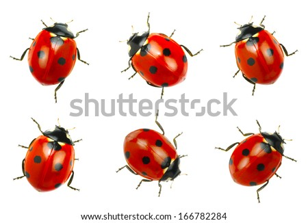 Ladybugs isolated on white background Royalty-Free Stock Photo #166782284