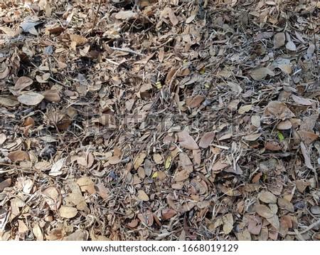 Dry leaves debris on the ground #1668019129