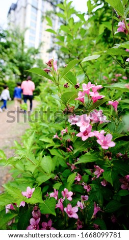 Pink flowers blooming on the street of the park #1668099781