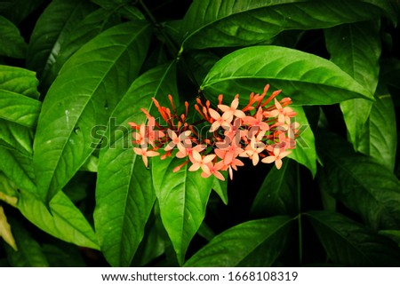 Red ochid flowers on green leaves #1668108319