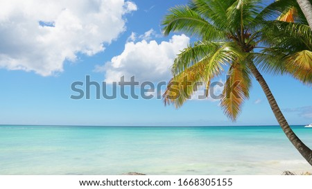 Palm tree and sky landscape. Indonesia Bali islands amazing sunny day. Coconut palm tree and blue sky and cloud background. Travel to paradise. Tropic fond with palm and heaven copy space