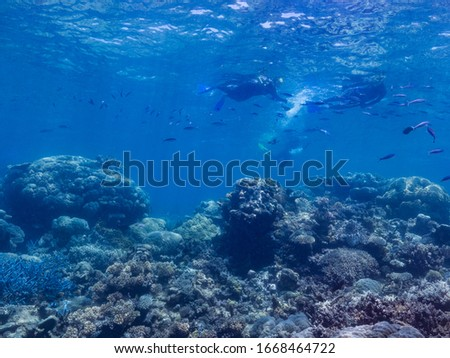 coral and fish of the great barrier reef #1668464722