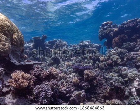 coral and fish of the great barrier reef #1668464863