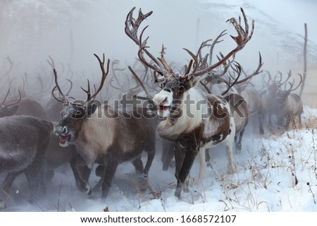 Reindeer on a background of snow and forest Royalty-Free Stock Photo #1668572107