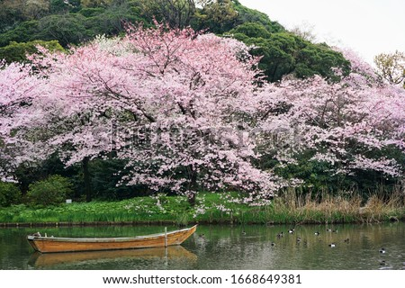 Row boat in a pond with pink and white cherry blossoms
