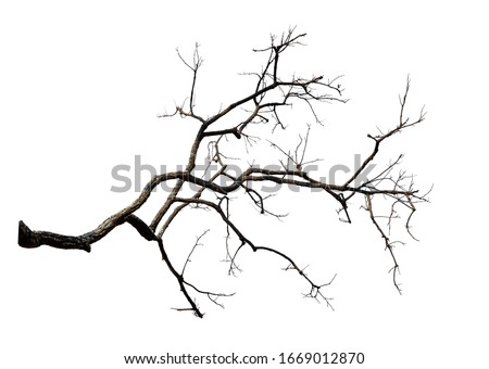 Branch of dead tree with clipping path isolated on white background. Royalty-Free Stock Photo #1669012870
