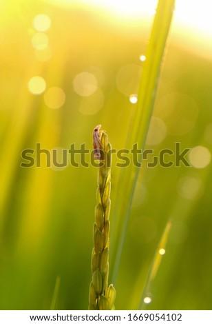 Macro Cicada - amazing nature Viet nam