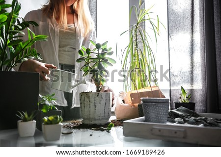 gardening home. Girl replanting green pasture in home garden.indoor garden,room with plants banner Potted green plants at home, home jungle,Garden room gardening, Plant room, Floral decor. #1669189426