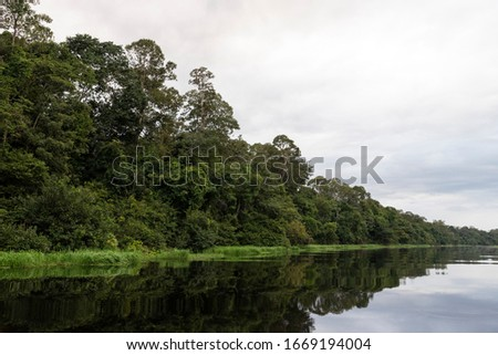 Typical Amazon rainforest and river landscape near Negro River close to Manaus, Amazonas, Brazil